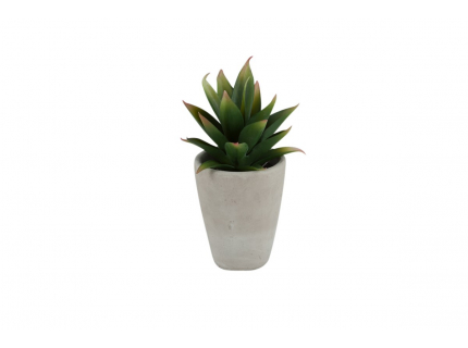 Deco Agave